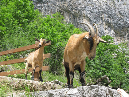 LG 1601 