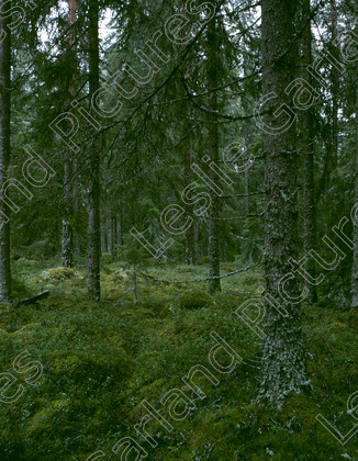 6031.02.01 