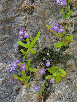 LG 2175 
